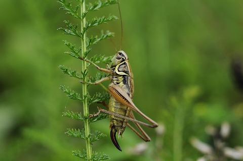 cricket-my-list-mag