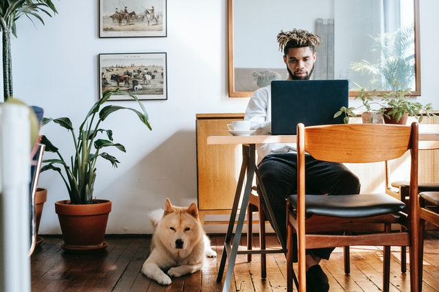 Jobs For Dog Lovers In USA 2021