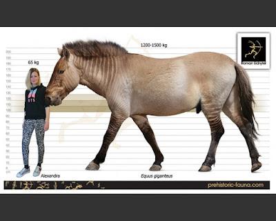 Equus gianteus