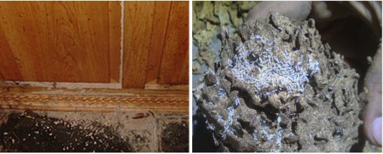 再生研磨,石材美容,大理石拋光,石材拋光,高雄除蟲,高雄除白蟻,二氧化氯殺菌劑