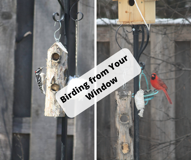 10 Tips for Birding from Your Window