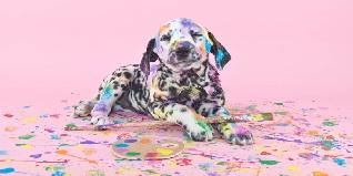 cepillado de perro