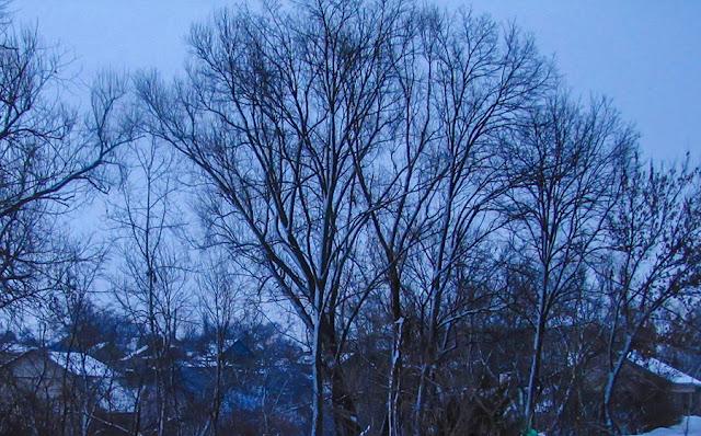 Зимние Дубоссары