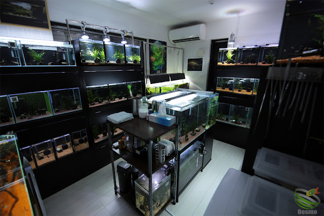 my fish room
