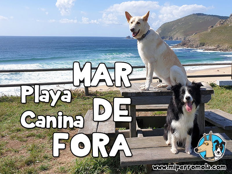 Playa Canina MAR DE FORA - Fisterra