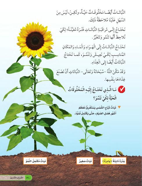 لماذا تحتاج النباتات إلى الغذاء