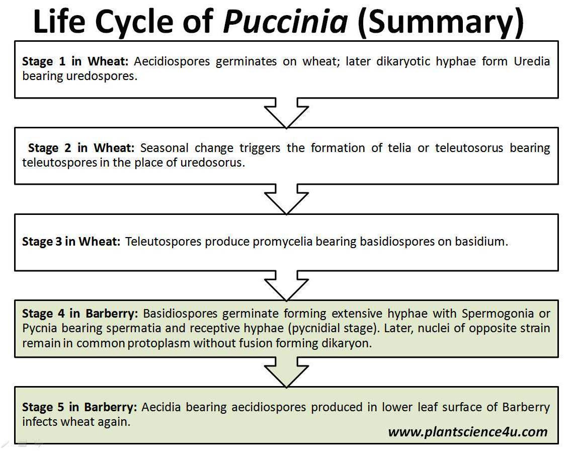 medium resolution of plant science 4 u