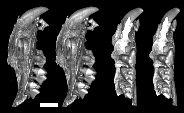 Researchers discover remains of bizarre group of extinct snail-eating marsupials