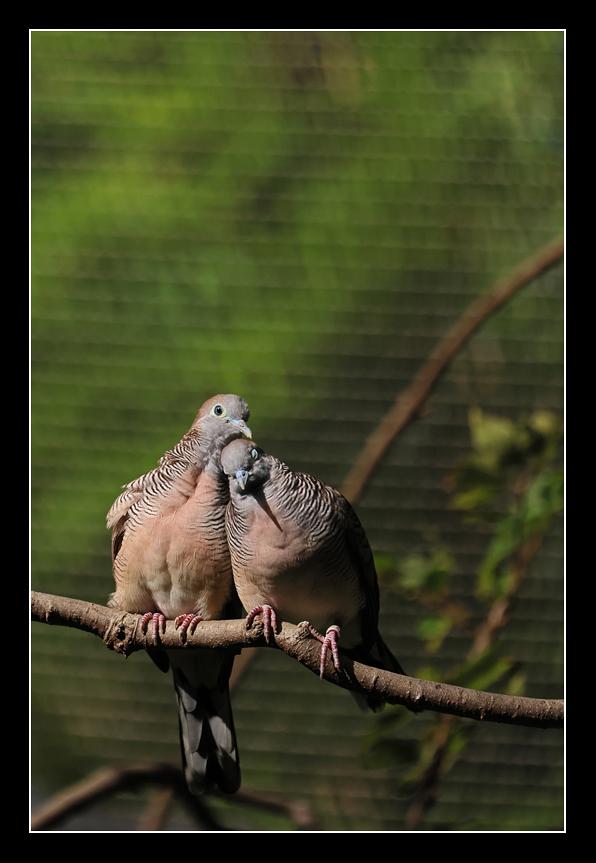 香港公園,觀鳥園