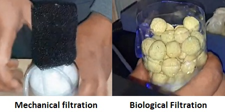Mechanical and biological filtration