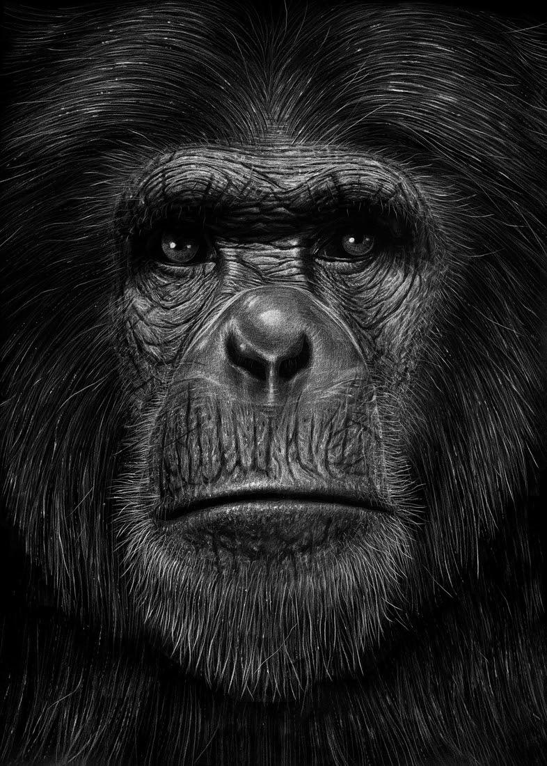04-Gorilla-Børge-Bredenbekk-Eclectic-Subjects-in-Realistic-Pencil-Drawings-www-designstack-co
