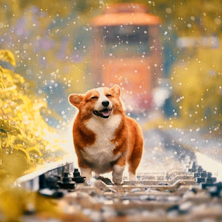 cute and sweet dog whatsapp dp images free download