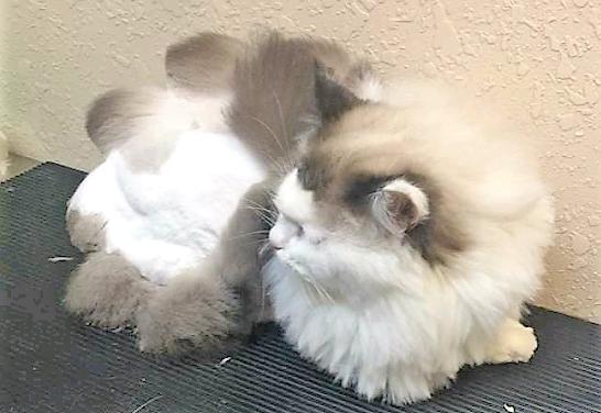 AZ Pet Stylist, Inc : Cat Owners