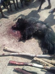 Homem mata capelobo na cidade de Barra do Corda