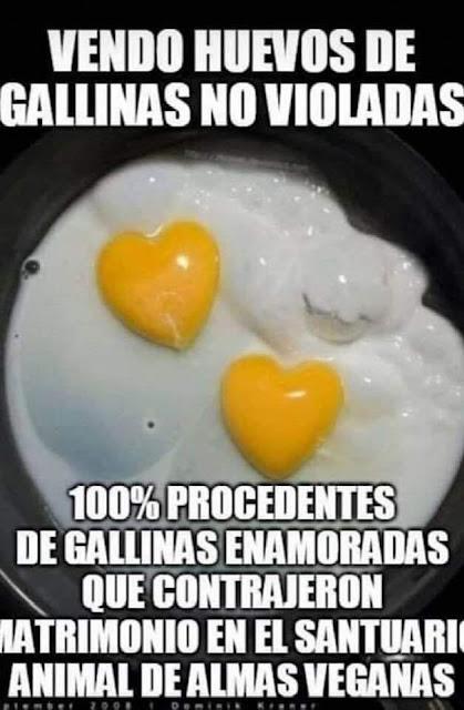 Vendo huevos de gallinas no violadas
