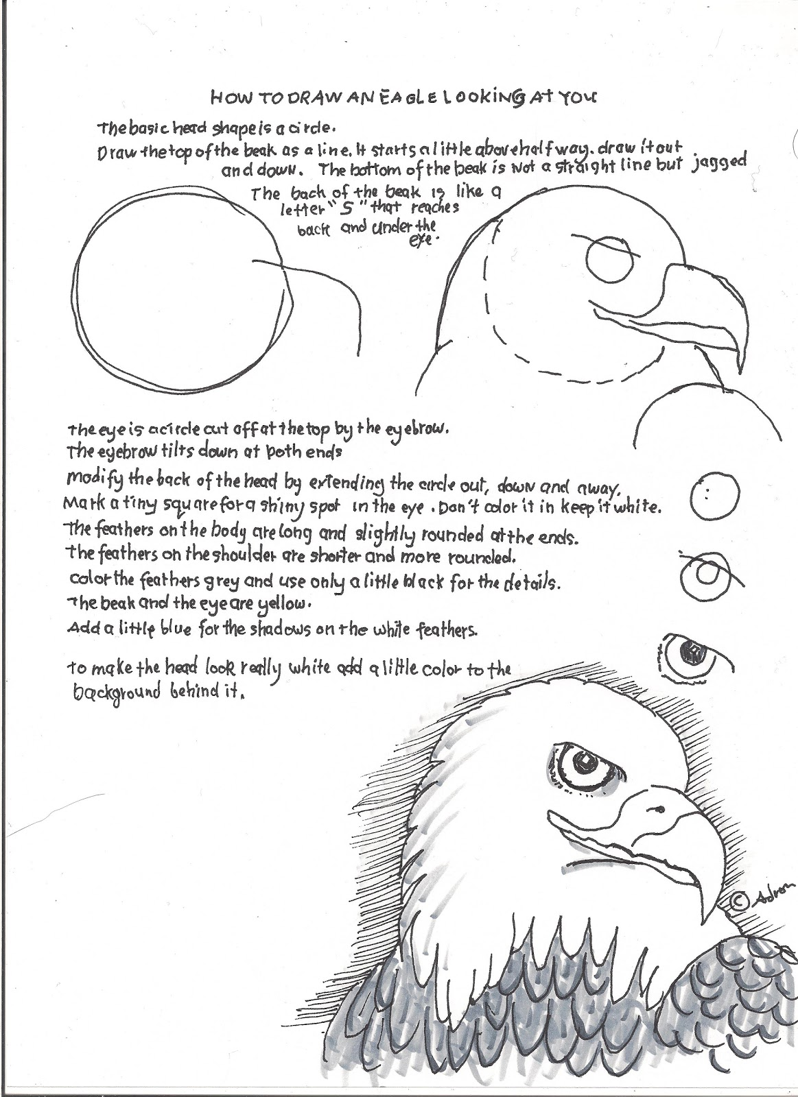 How To Draw Worksheets For The Young Artist How To Draw An Eagle Face Lesson And Worksheet