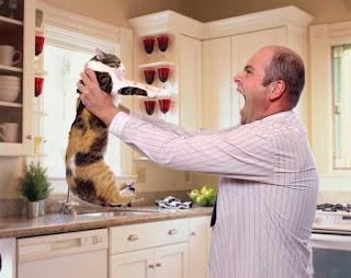 Cómo educar a tu gato