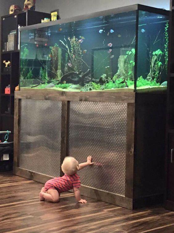 các em bé rất thích thú với bể thủy sinh
