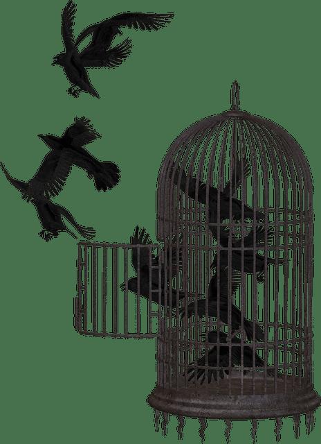 como cuidar dos pássaros