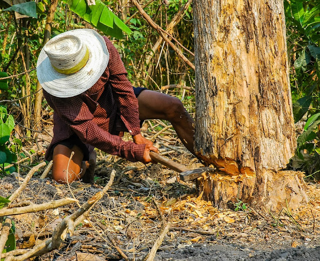 albero-ascia-tagliare alberi-normativa