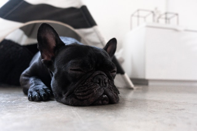 7 Amazing Reasons Why Your Dog Should Sleep In Your Bed at midnight