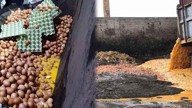 Μέγαρα καταστράφηκαν από τους «Ράμπο» του ΣΔΟΕ 324.000 αβγά