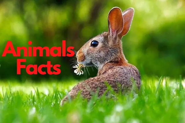 200 Facts About Animals In Hindi