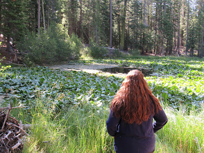 kid friendly hikes in northern california