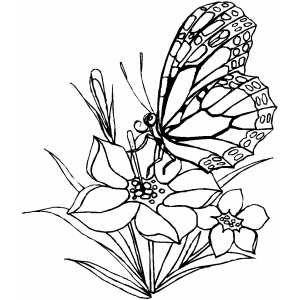 Butterfly coloring pages coloring pages for Beautiful butterfly coloring pages