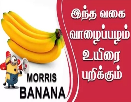 Morris Banana Shocking Facts | IBC Tamil Tv