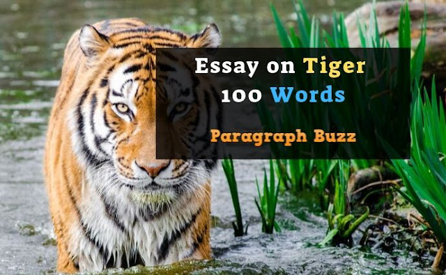 Essay on Tiger 100 Words