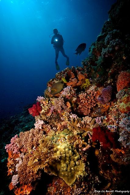 10 Places You Shouldn't Miss in Indonesia | Diving in the Komodo National Park, Indonesia