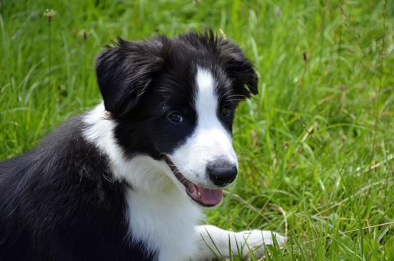 Ini Penyebab Anjing Menjadi Hewan yang Sangat Setia Pada Pemiliknya, naviri.org, Naviri Magazine, naviri majalah, naviri