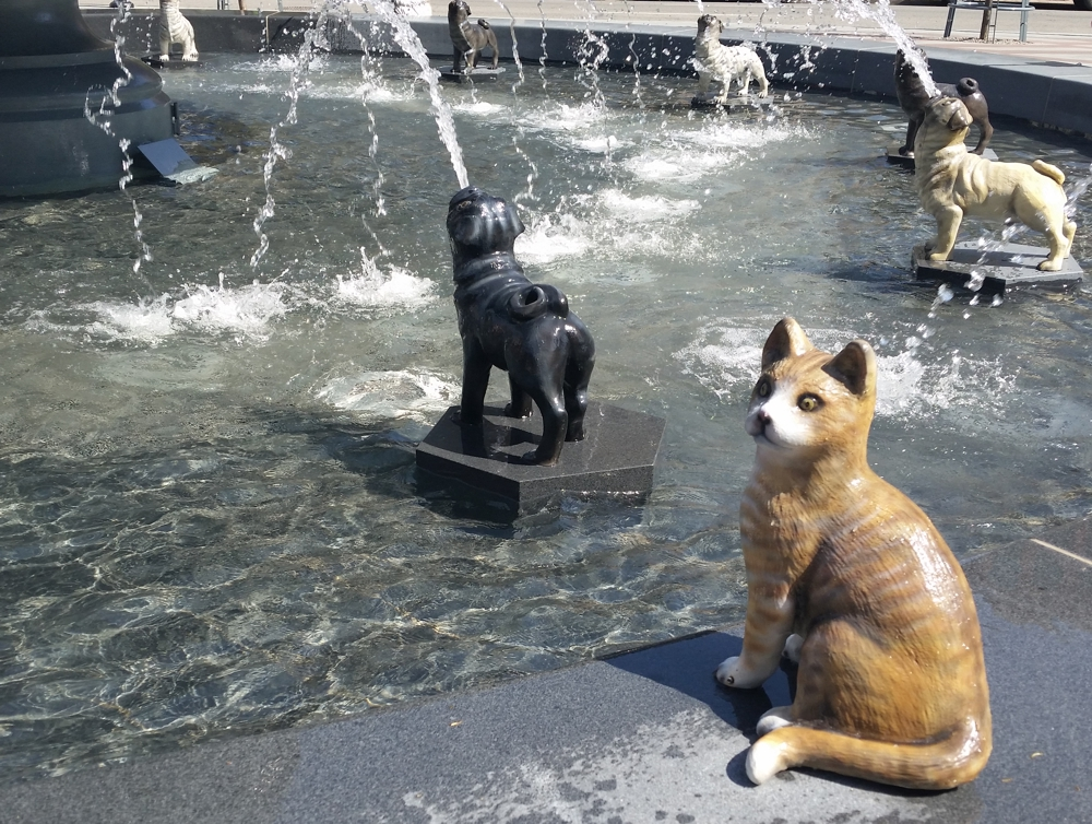 Park In Toronto For Dogs And Cats