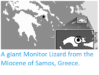 https://sciencythoughts.blogspot.com/2012/08/a-giant-monitor-lizard-from-miocene-of.html