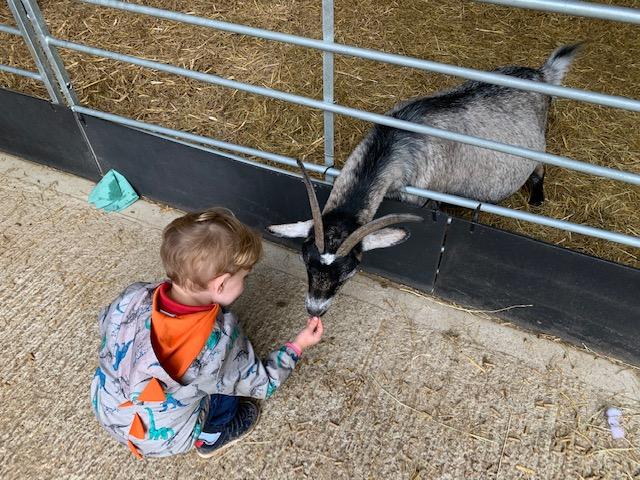 Little boy feeding a goat at the farm