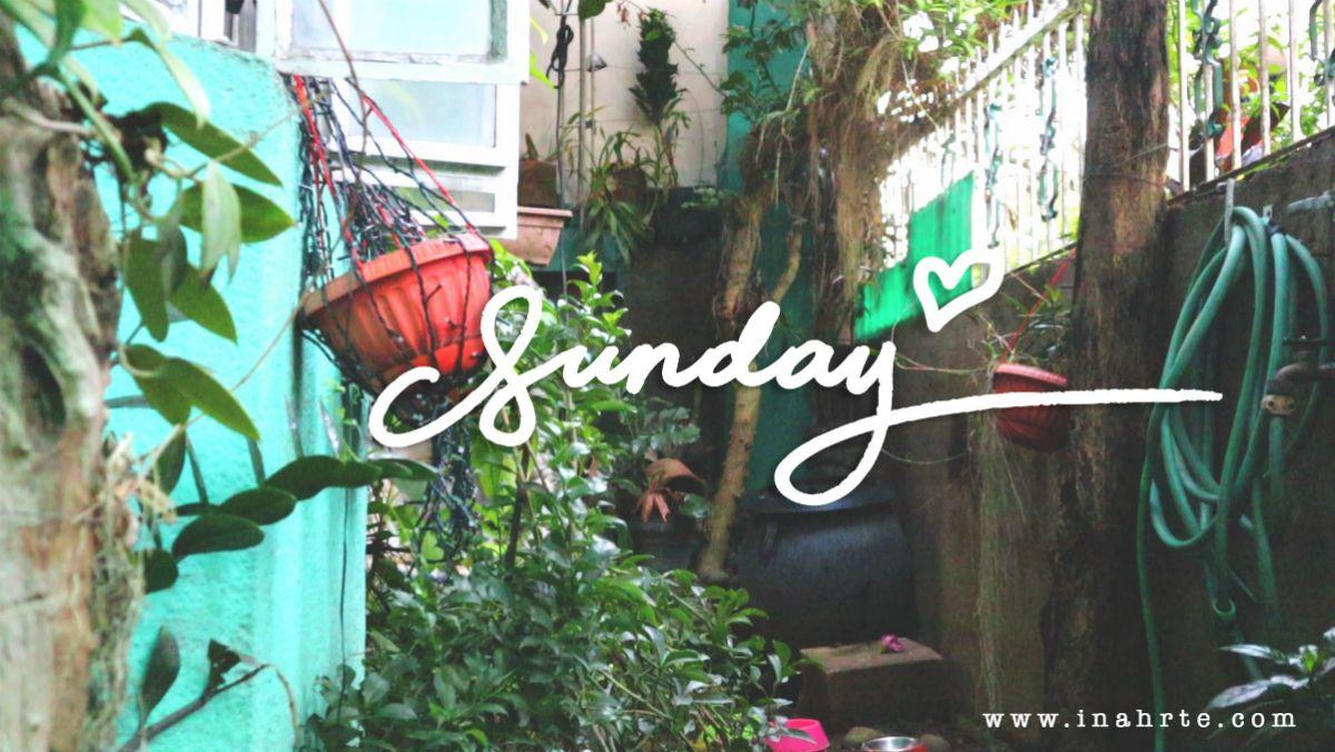 INAHRTE | plants on a backyard | Sunday