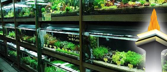 Aquascapejuara Daftar Toko Galeri Aquascape Di Jakarta Dan Sekitarnya