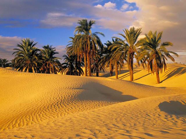 http://1.bp.blogspot.com/-CvoKd6ITcc0/Vi3JgfadJHI/AAAAAAAADuE/KlFo2cF7EUo/s1600/Desert%2BPalm%2BTrees.jpg