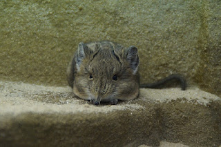 Smallest Animals Facts You Never Know This Smallest Animals Facts