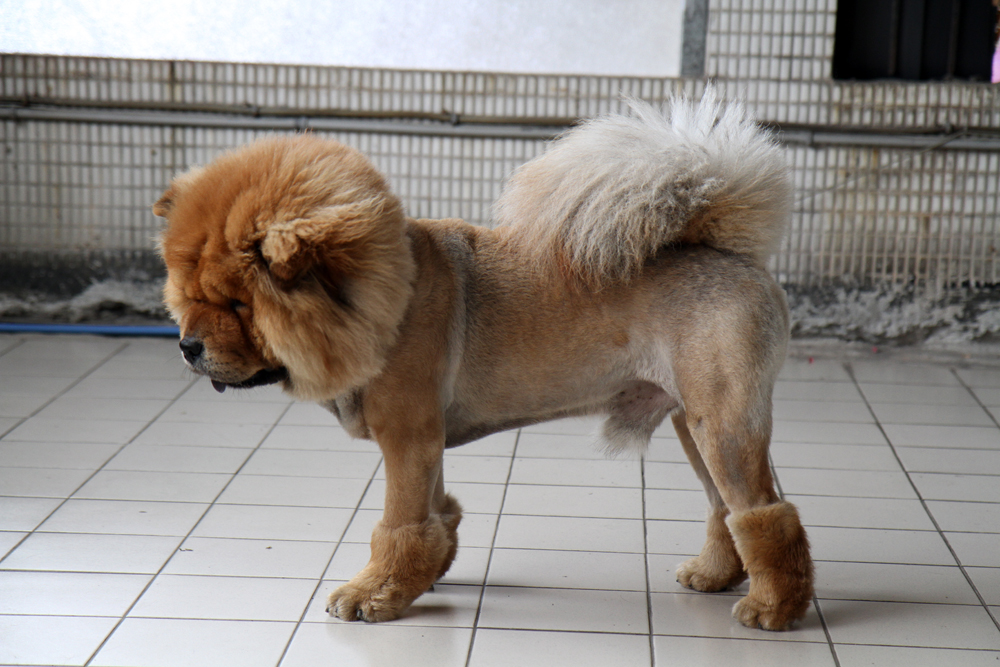 Posh Purpose Bits From Behind The Scenes A Lion Dog