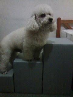 exercício na escada para cães
