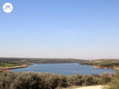 Laguna Zoñar humedal interior Córdoba
