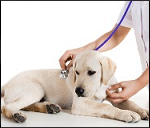 dog care and treatment