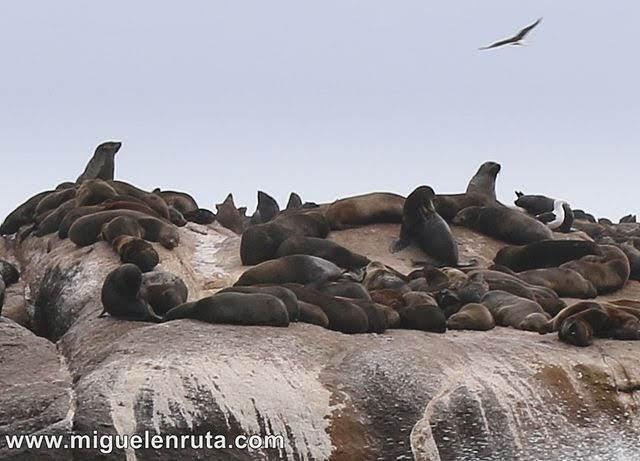 León-marino-Sudáfrica