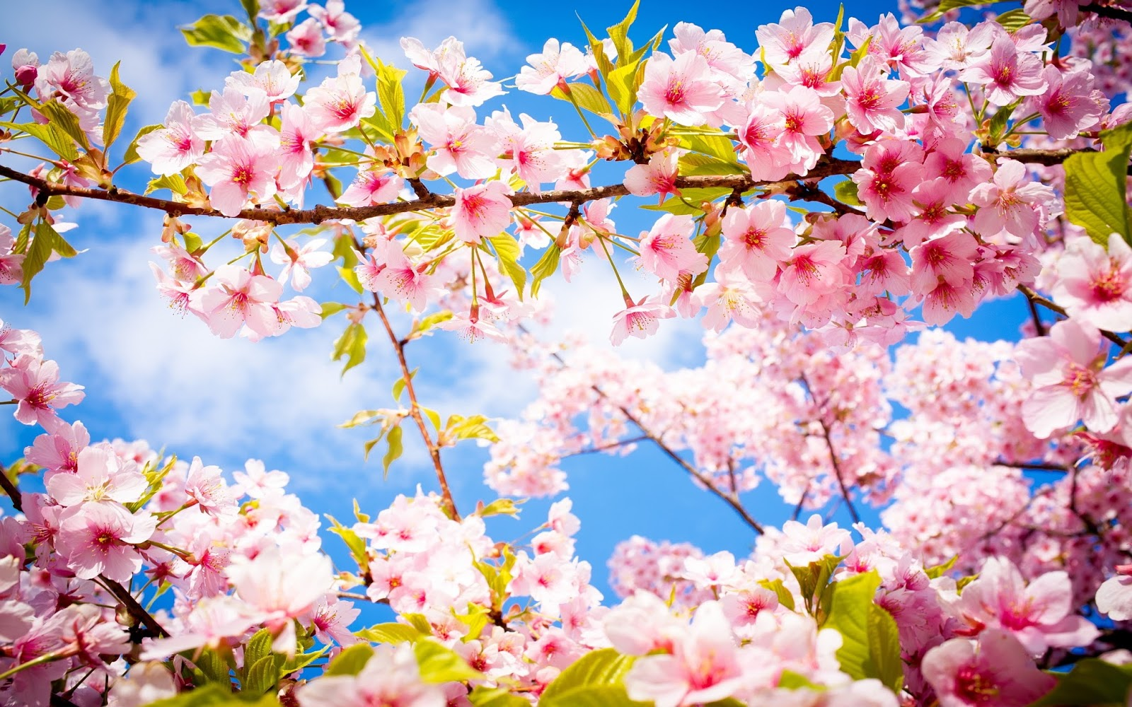 Popular   Wallpaper Home Screen Spring - Spring%2BHD%2BWallpapers%2B%25288%2529  Collection_4818.jpg