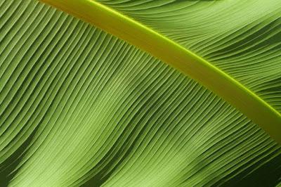Patern dan manis daun motif garis hijau
