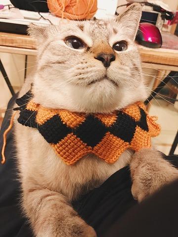 編みかけの猫セーター