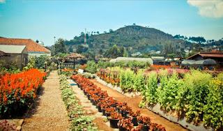 Kebun Bunga Taman Begonia Lembang Bandung