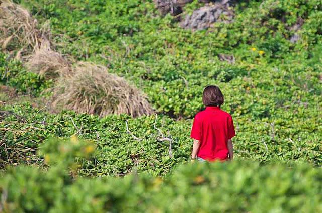 Girl wandering through vegetation